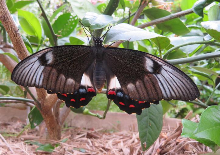 butterfly 008_4575x3234