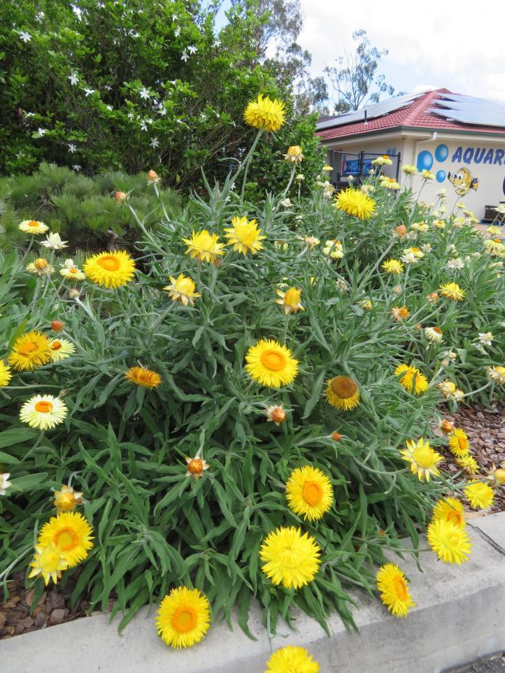 garden garage kookaburra 037_3888x5184