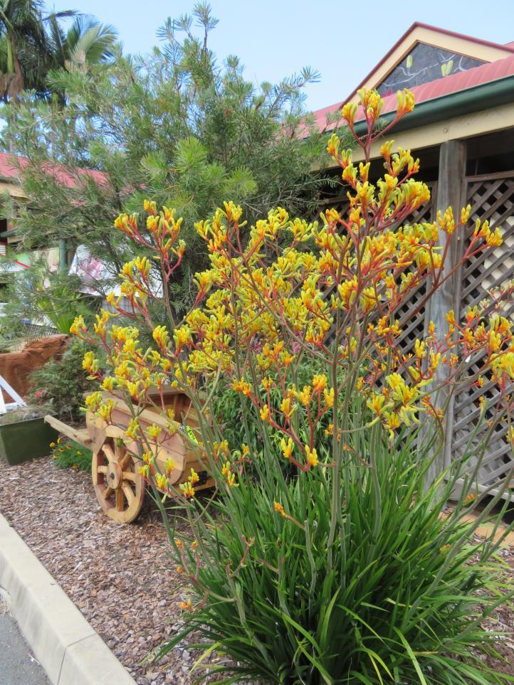 garden garage kookaburra 038_3888x5184