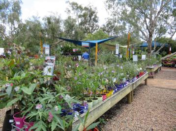 garden garage kookaburra 053_5184x3888