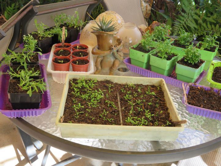 garden garage kookaburra 089_5184x3888