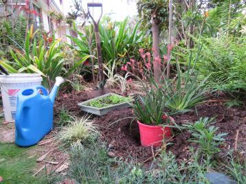 garden planting natives rain 001_5184x3888