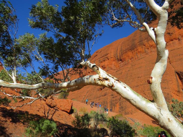 outback tour jc 313_4000x3000