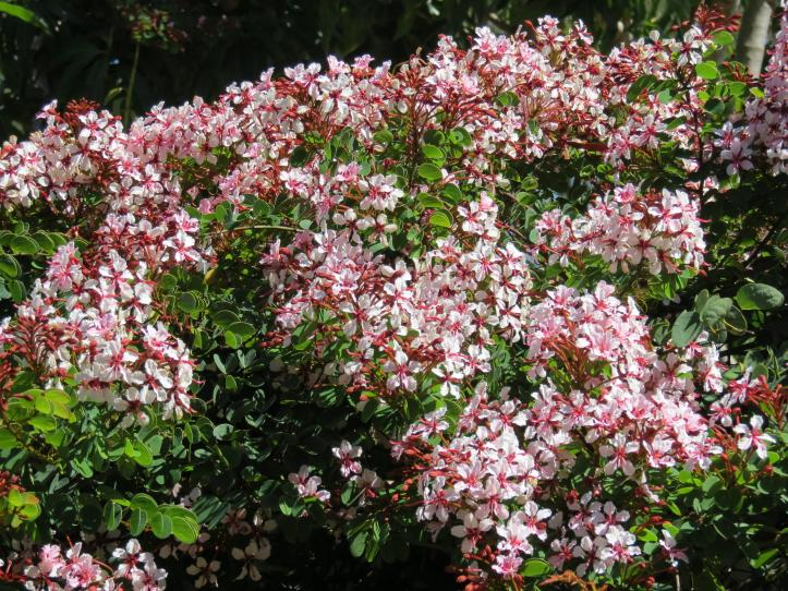 shed kookaburra flowers 014_4000x3000