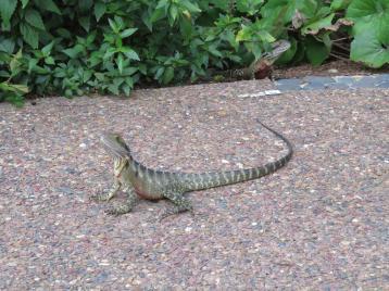 Brisbane art gallery roma street gardens 184_5184x3888