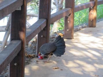 ocean walkway desert rose butcher birds 061_5184x3888