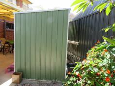 shed garden mango tree next door 001_5184x3888