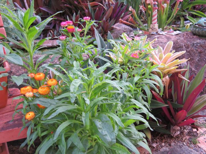 2018 january garden 012_5184x3888
