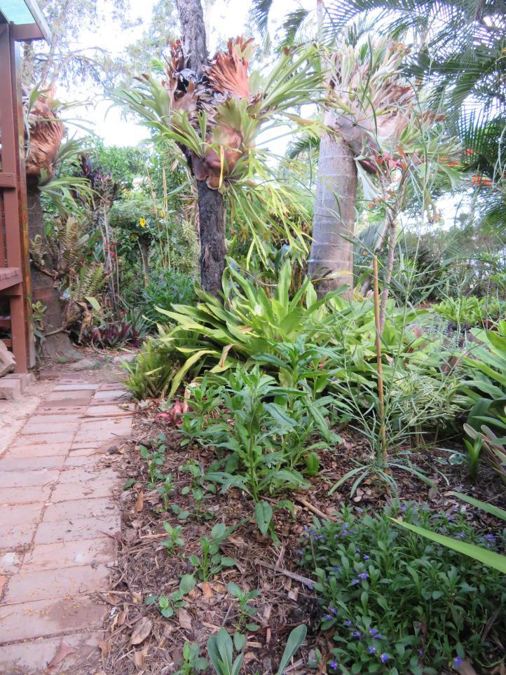2018 january garden 021_3888x5184
