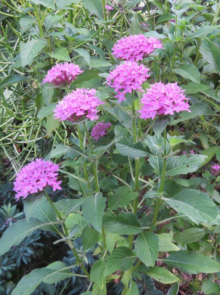 plants unhappy 007_2189x2933