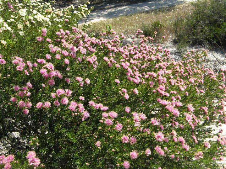 Lake walk W flora pc 035_3264x2448