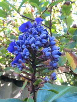 The garden 022_3000x4000