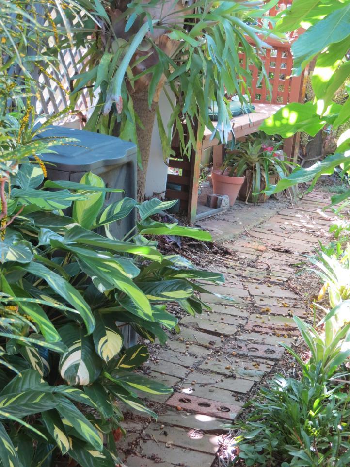 The garden 060_3000x4000