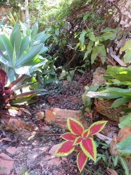 5 min garden 011_3888x5184