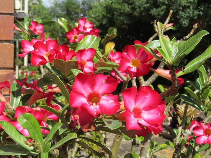 5 min garden 015_5184x3888