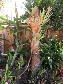 5 min garden 025_3888x5184