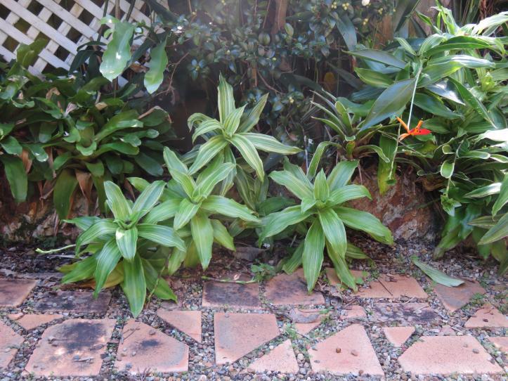 5 min garden 028_5184x3888