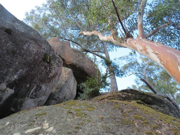 thunderbolt lair bald rock autumn leaves 047_4000x3000