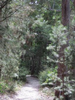 thunderbolt lair bald rock autumn leaves 091_3000x4000