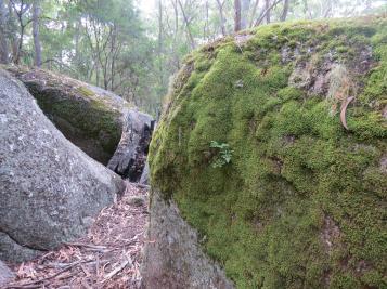 thunderbolt lair bald rock autumn leaves 124_4000x3000