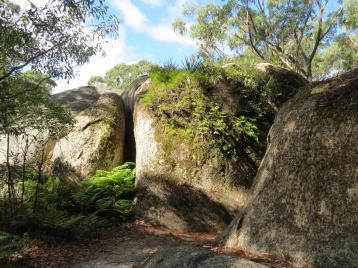 thunderbolt lair bald rock autumn leaves 149_4000x3000