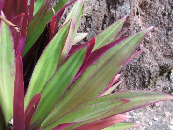 garden green april 007_4000x3000