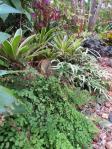 garden green april 015_3000x4000