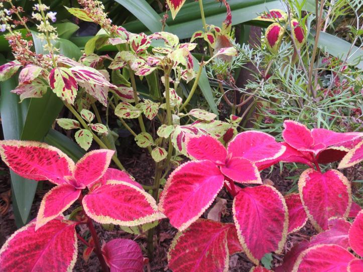 garden green april 020_4000x3000