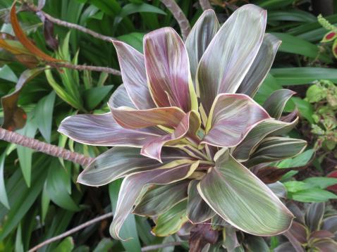 garden green april 021_4000x3000