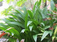 garden green april 022_4000x3000