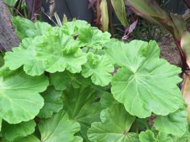 garden green april 037_4000x3000