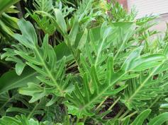 garden green april 038_4000x3000