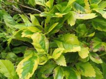garden green april 039_4000x3000