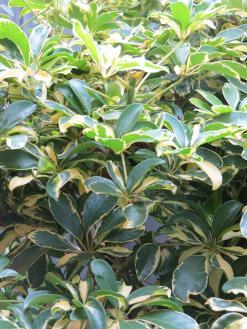 garden green april 043_3000x4000
