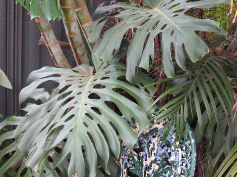 garden green april 046_4000x3000