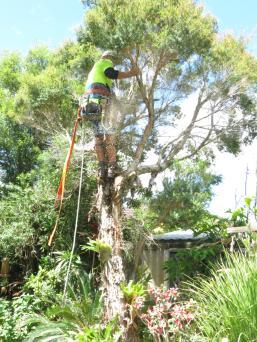 Big Jim tree cutting 038_3000x4000