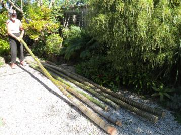 garden pruning 011_4000x3000