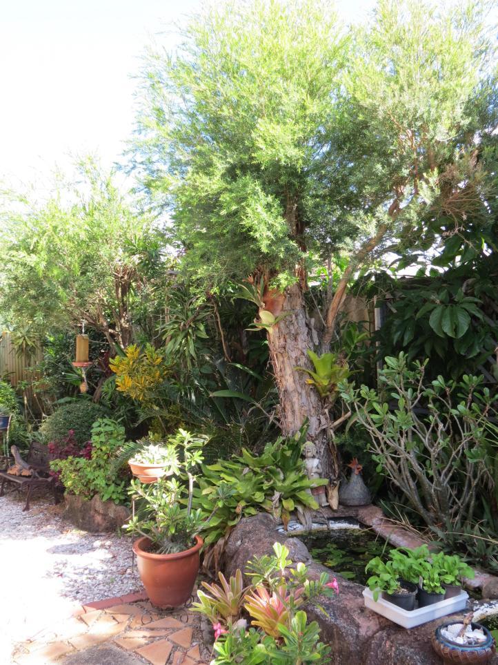 May 2015 garden 095_3000x4000