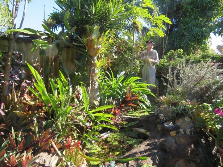 palm pruning 006_5184x3888