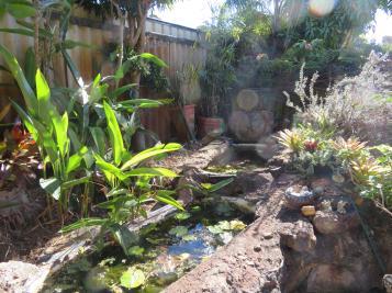 palm pruning 030_5184x3888