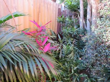 side garden (9 of 17)_5184x3888