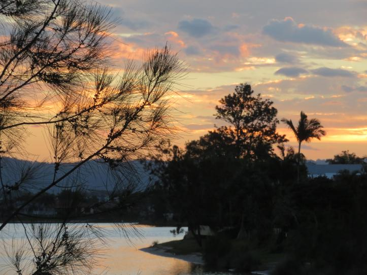 sunset swans leaves 037_5184x3888