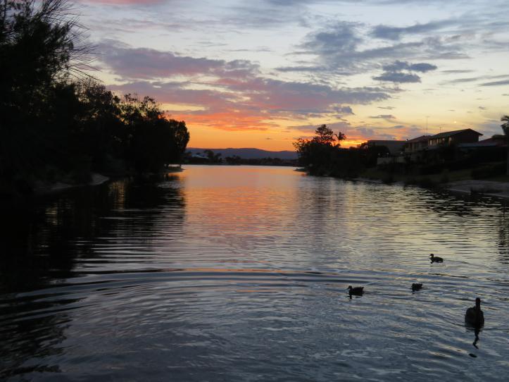 sunset swans leaves 057_5184x3888