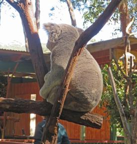 currumbin sanctuary family 002_3157x3324