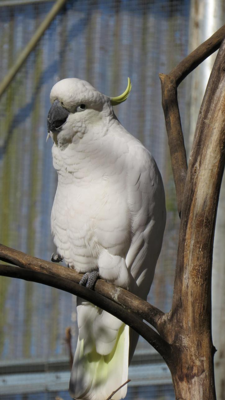 maleny bird world 177_2248x4000