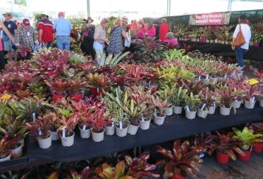 nambour garden expo 036