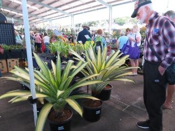 nambour garden expo 040
