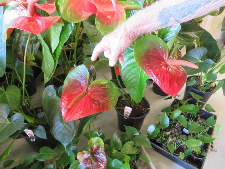 nambour garden expo 097