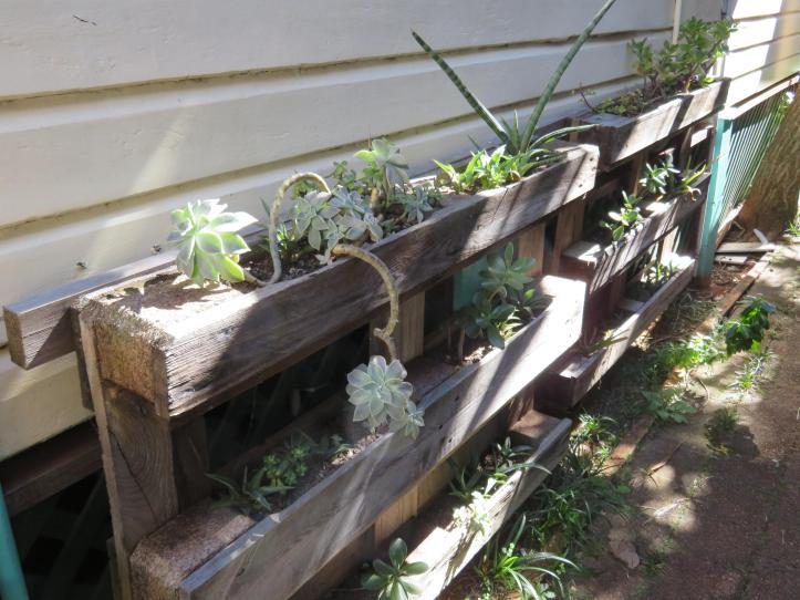 nambour garden expo 178_5184x3888