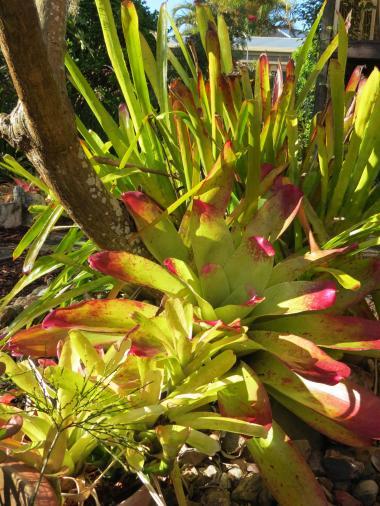 august garden 013_3000x4000